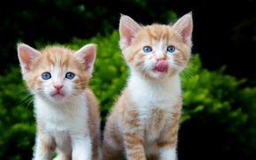 Picture kittens, kids, red, a couple
