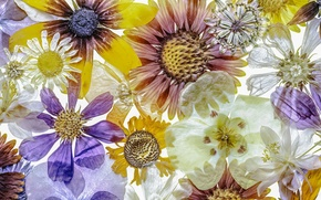 Picture flowers, background, texture