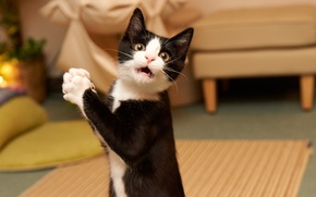 Picture kitty, humor, Cat, beautiful, beautiful, funny, funny, humor, Kitty, Amazed Cat, surprise, Surprised, Affected