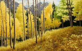 Picture autumn, mountains, picture, peace, September, aspen