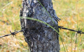Picture grass, swamp, Wire, bark, pine