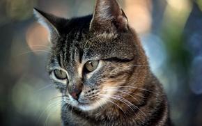 Wallpaper cat, glare, looks