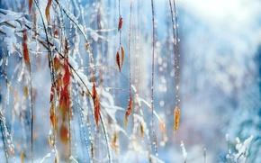 Picture macro, foliage, branches, snow, winter