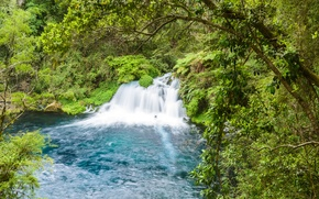 Picture greens, forest, trees, branches, Park, stream, stones, foliage, waterfall, the bushes, Chile, Conguillio National Park