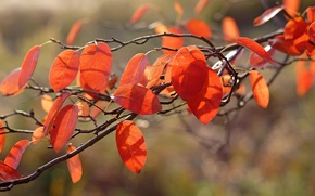 Picture macro, branch, foliage, light, autumn, orange