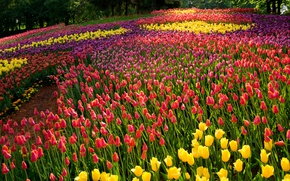 Wallpaper tulips, trees, summer, colorful, Park, flowers