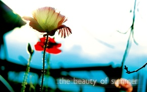 Picture macro, light, flowers, Summer, CMYK