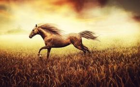 Picture field, horse, running, grass, nature, horse