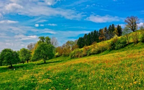 Picture the sky, grass, trees, slope, meadow