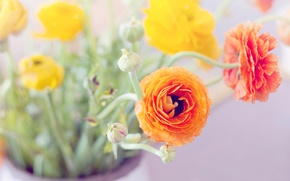 Picture leaves, flowers, bouquet, yellow, petals, vase, orange, buds, buttercups, ranunculus