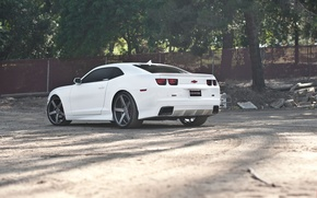 Picture drives, white, the fence, trees, white, wheels, Chevrolet, black, camaro, black, chevrolet, Camaro