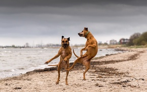 Picture dogs, river, dance