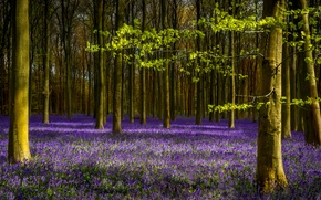 Picture forest, leaves, trees, branches, spring, lavender