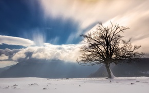 Picture snow, mountains, fog, tree