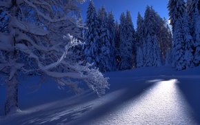 Wallpaper winter, forest, snow, trees