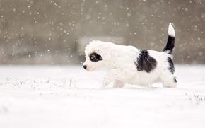 Picture dog, snow, eye, snowing, suspicious, alert