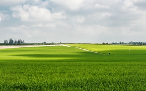 Picture greens, the sky, grass, green, Field, sky, field