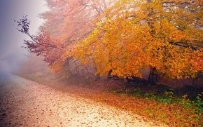 Picture road, autumn, nature, fog, tree