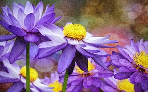 Picture flowers, water lilies