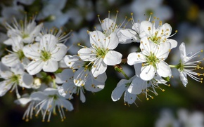 Picture flowers, branch, white