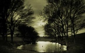Picture sadness, autumn, trees, Sepia, Puddle