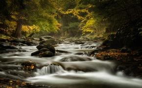 Picture autumn, forest, river, stream, stones, Massachusetts, Bash Bish Brook