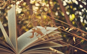 Picture grass, book, page