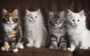Picture sofa, four, kittens