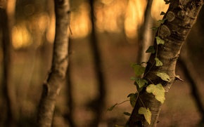 Picture leaves, macro, trees, green, background, tree, widescreen, Wallpaper, blur, wallpaper, leaves, bark, widescreen, leaves, background, …