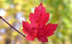 Picture autumn, nature, sheet, the crimson