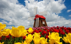 Picture the sky, clouds, flowers, nature, spring, tulips, sky, nature, flowers, clouds, tulips, spring, windmill, windmill