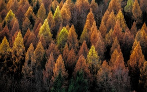 Picture autumn, forest, trees, nature
