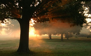 Wallpaper rays, light, trees, leaves, the sun, grass, autumn, forest