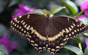 Picture macro, butterfly, wings