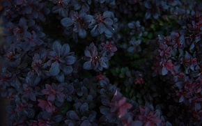 Picture purple, summer, flowers, blue, plants