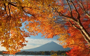 Picture trees, Japan, leaves, lake, house, mount Fuji, the sky, autumn