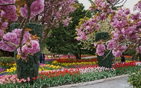 Picture flowers, Park, Nature, colors, spring, nature, park, spring, flowering