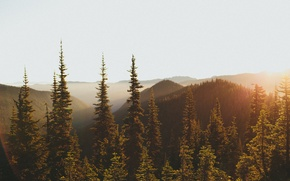 Picture forest, light, mountains, morning