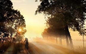 Picture road, light, bike, fog, morning