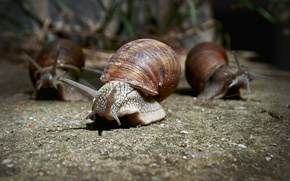 Picture macro, snails, walk, photographer, Pasha Ivanov