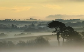 Picture the sky, trees, fog, dawn, England, home, England, Cornwall, Cornwall