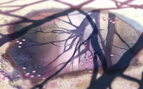 Picture reflection, 5 centimeters per second, Makoto Xingkai, cherry leaves.