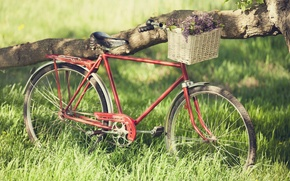 Picture greens, summer, grass, dream, freedom, joy, flowers, red, bike, great, tree, mood, romance, frame, spring, …