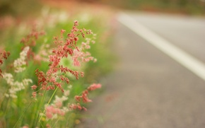 Picture summer, grass, macro, nature, glade, highway, summer, grass, road, nature, meadow, path