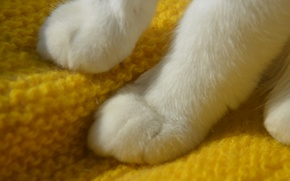 Picture white, cat, paws