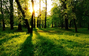 Picture forest, grass, trees