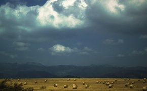 Picture the sky, landscape, clouds, contrast, hay