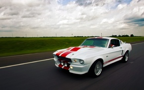 Picture Mustang, Ford, Shelby
