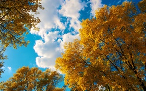 Picture autumn, the sky, leaves, clouds, trees, crown