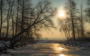 Picture ice, winter, the sun, snow, trees, river